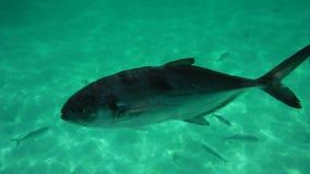 Рыба Стоковые Фото