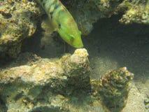 Рыба стоковые фотографии rf