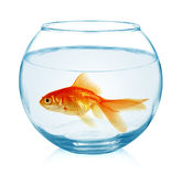 Рыбка в изолированном аквариуме Стоковые Изображения RF