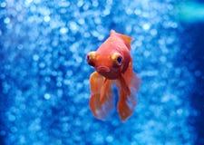 Рыбка в открытом море и воздушных пузырях позади Стоковые Изображения