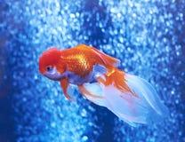 Рыбка в открытом море и воздушных пузырях позади Стоковое Изображение RF