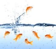 Рыбка ища концепция избежания пути вне - Стоковые Фото
