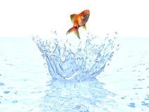 Рыбка скача из воды Стоковые Изображения