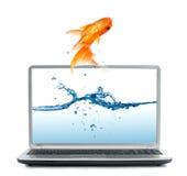 Рыбка скача из монитора стоковые изображения
