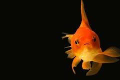 Рыбка смотря вас Стоковое Изображение