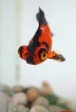 Рыбка Стоковая Фотография RF