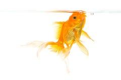 Рыбка Стоковые Фотографии RF