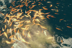 Рыбка Стоковые Изображения
