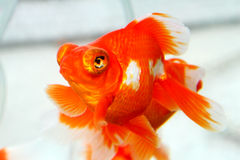 Рыбка Стоковые Фото