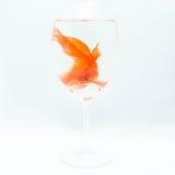 Рыбка Стоковое Фото