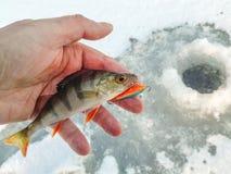 Рыбная ловля зимы от льда Стоковые Фото
