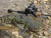 Рыбная ловля Baitcasting в Центральной Европе стоковое изображение rf