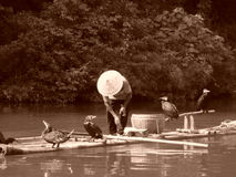 Рыбная ловля баклана в Китае Стоковое Изображение RF