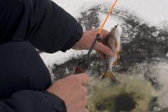 Рыбная ловля зимы Стоковое фото RF