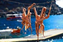 Рыбная ловля кальмара Стоковые Фото