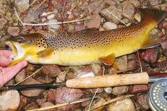 Рыбная ловля мухы - рыба, штанга и вьюрок Стоковое Изображение RF