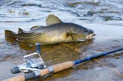 Рыбная ловля побережья трески Стоковая Фотография RF
