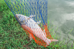 Рыбная ловля приключения Стоковые Фотографии RF