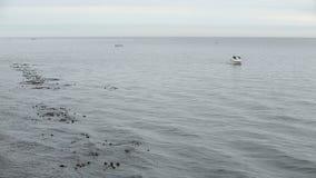 Рыбная ловля спорта Salmon акции видеоматериалы
