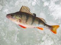 Рыбная ловля льда в России Стоковое Фото