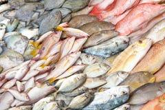 рыбный базар влажный Стоковое Фото