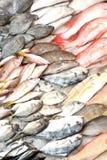 рыбный базар влажный Стоковые Фото