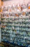 Рыбный базар в Гонконге, Китае Стоковые Изображения RF