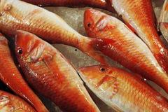 Рыбный базар в Италии - атлантическом goatfish (prayensis Pseudupeneus) Стоковое Изображение RF
