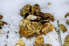 рыбный базар деликатности Свежие scallops на белой предпосылке стоковое изображение