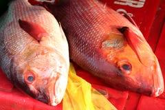 Рыбный базар Стоковая Фотография RF