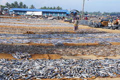 рыбный базар Стоковые Фотографии RF
