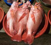 Рыбный базар - Flores Индонезия Стоковое Изображение RF