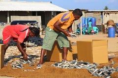 Рыбный базар Negombo Стоковые Изображения RF