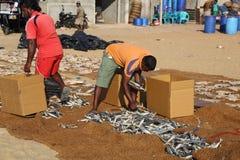 Рыбный базар Negombo Стоковые Фото