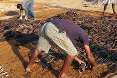 Рыбный базар Negombo Стоковое Изображение RF
