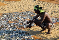 Рыбный базар Negombo Стоковая Фотография