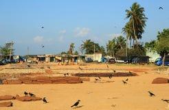 Рыбный базар Negombo Стоковые Изображения