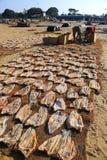 Рыбный базар Negombo Стоковое Изображение