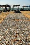 Рыбный базар Negombo Стоковые Фотографии RF