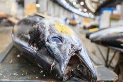 Рыбный базар Tsukiji Стоковое Изображение RF