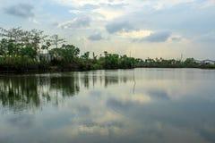 Рыбный пруд и голубое небо стоковые фотографии rf