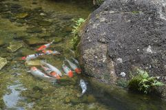 Рыбный пруд Стоковые Изображения