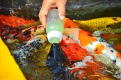 Рыбный пруд на виске Phraya Suren Стоковое Изображение RF