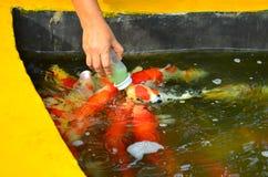 Рыбный пруд на виске Phraya Suren Стоковое Изображение