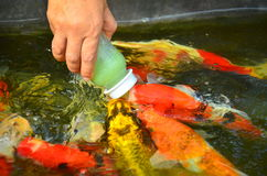Рыбный пруд на виске Phraya Suren Стоковые Фотографии RF