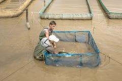 Рыбоводческое хозяйство Стоковое Фото