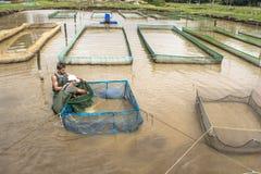 Рыбоводческое хозяйство Стоковое Изображение