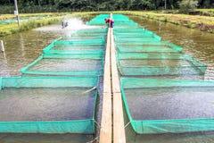 Рыбоводческое хозяйство Стоковые Фотографии RF