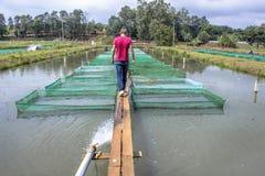 Рыбоводческое хозяйство Стоковые Фото