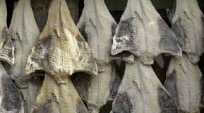 Рыбозавод посоленной трески стоковые изображения rf